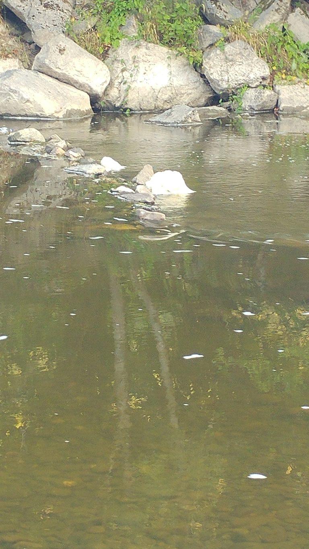 L'ourthe ce WE ou comment détruire une rivière en 3 leçons